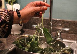 Herbs being cleaned in a sink